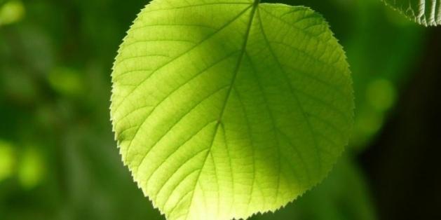 كيف يحول النبات ضوء الشمس إلى طاقة كهربائية؟