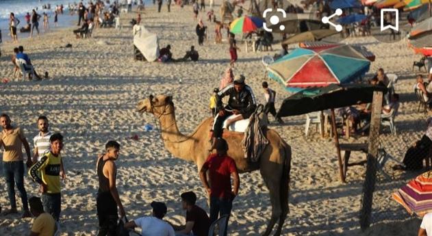 """""""سينما على الرصيف"""".. أفلام على شاطئ غزة احتفالا بالعيد"""